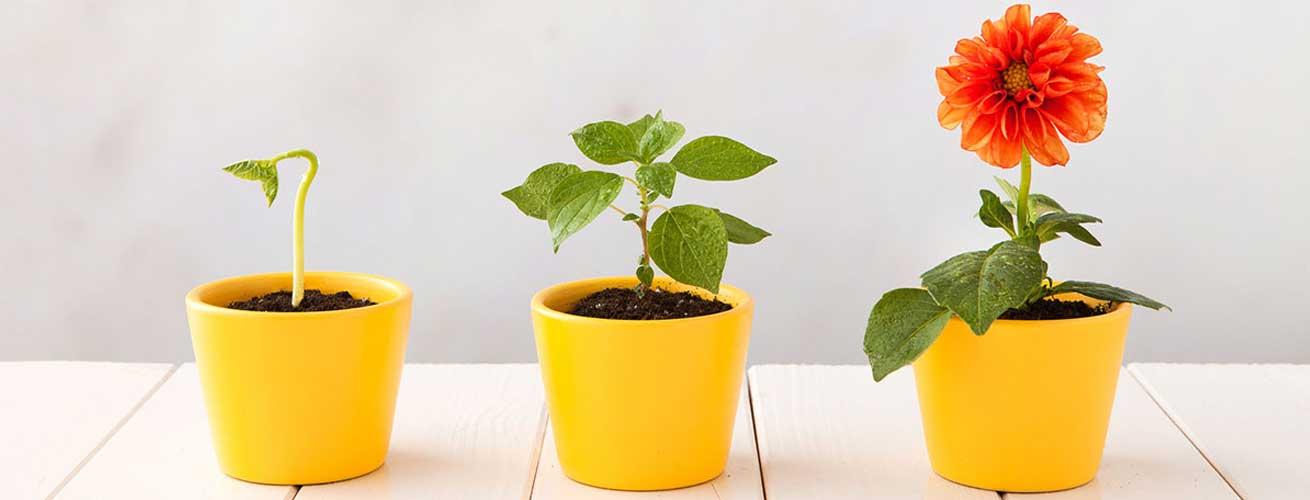 Entwicklungsstadien einer Pflanze